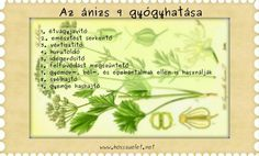 anizs 9 hatasa Did You Know, Herbs, Drink, Image, Food, Kitchen, Poster, Beverage, Cooking