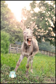 Have Some Laughs With These Donkey Memes - World's largest collection of cat memes and other animals Funny Donkey Pictures, Donkey Images, Donkey Funny, Cute Donkey, Funny Animal Pictures, Cool Pictures, Shrek Donkey, Pictures Images, Funny Images