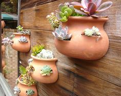 Succulents galore by tuscaloosa designs