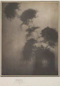 The Shadows on the Wall/Chrysanthemums – Adolf de Meyer (1868–1949)