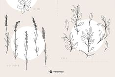 Healing Herbs Patterns and Illustrations