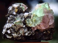 Gorgeous pink and green zoned octahedral Fluorites on Muscovite! Excellent specimen! The bi-color Fluorite crystals are scattered atop the Muscovite books and Albite. The largest Fluorite measures 7 cm across. Total specimen size is 8.5 cm by 11 cm with scattered white Albite crystals. From Nagar, N.W.F.P., Pakistan. Very nice!