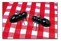 picnic ants!