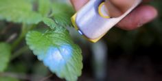 Molecular sensor to analyse chemical make-up