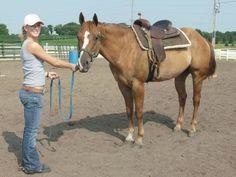 Quarter Horse For Sale   Red Dun Gelding   Horse Classifieds
