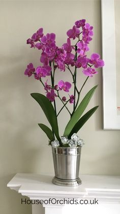 Pink Champagne on Ice Orchid Gift Arrangement from House of Orchids London #orchids