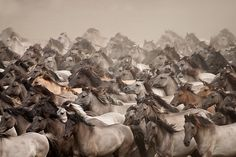 "A beautiful image......""Wild Horses"" by Stefanie Lategahn"