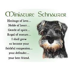 I've been fortunate to have known many dogs in my life, but I've never loved one like I've loved my schnauzers! ( and I second that.. I love my little schnauzer friends so much)