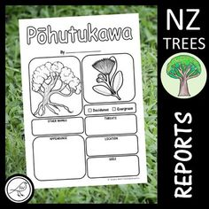 New Zealand Trees Report Templates Information Report, Tree Information, School Resources, Classroom Resources, Teaching Resources, Spelling Words, Sight Words, Teaching Kids, Kids Learning