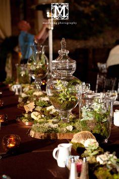 Centerpieces with live plants in Apothecary