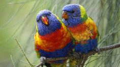 wallpaper-two-parrots-coloured.jpg (1920×1080)