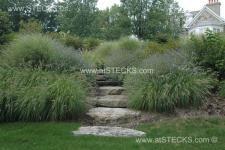 landscape_02_7_092 Ornamental grass during late summer. Large stone slab steps with landscape lighting.