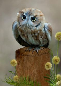 Western Screech Owl by Thanh Thuy Nguyen, digital medium...beautiful