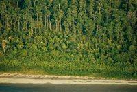 En el frente deltaico se aprecia la sucesión vegetal, desde las hierbas pioneras en la playa, hasta el bosque maduro en los terrenos más elevados.
