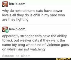 Me boy Tubbs must have a mega high level Neko Atsume, Neko Neko, Funny Cute, Hilarious, Thank You Tumblr, Funny Tumblr Posts, Text Posts, I Laughed, Funny Stuff