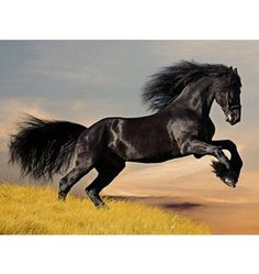 Home affaire, Glasbild, »Schwarzes Pferd«, 80/60 cm Jetzt bestellen unter: https://moebel.ladendirekt.de/dekoration/bilder-und-rahmen/bilder/?uid=3143d4ed-2aea-57c3-8ff6-0b6844eea9e6&utm_source=pinterest&utm_medium=pin&utm_campaign=boards #bilder #rahmen #dekoration