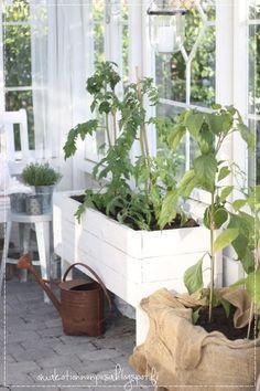 kasvihuone, vanhoista ikkunoista tehty kesähuone,