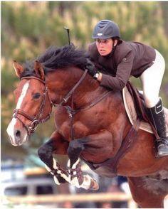 Anglo-Arabian stallion Ou Com Caou
