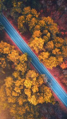 Autumn Road Forest - IPhone Wallpapers
