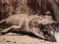 Very old photo of a big croc in QLD