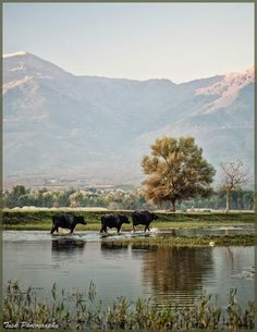Kerkini lake, Serres MAcedonia Hellas