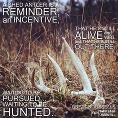 """What an exhilarating feeling when you find """"your"""" buck sheds. It is exciting to know you may get another chance."""