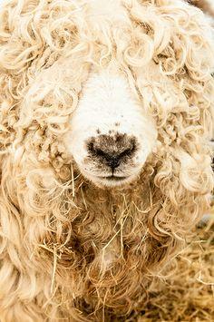 Do you like my curly hair?