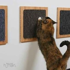 Glue a carpet sample to a wooden frame for a minimalist cat scratch post.