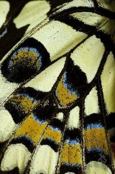 closeup of a wing