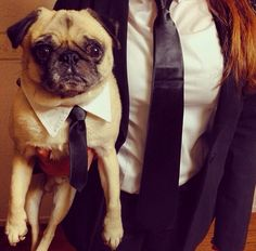 I you have a pug you def need to try this Halloween idea!!