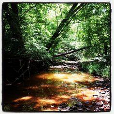 Lust Creek, Shawnee National Forrest