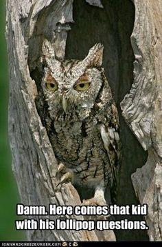 Tootsie Owl....