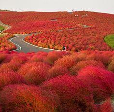 hitachiseasidepark Extraordinary Travel Destinations Off the Beaten Path