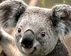 Mein Eukaliptus Liebhaber