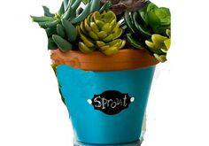 FolkArt Calypso Sky Chalkboard Label Pot - made with Handmade Charlotte Peel & Stick stencils available to buy in-store at major craft retailers #crafts #plaidcrafts #diy