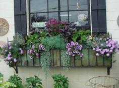'Perfume Purple' Nicotiana, persian shield, 'Lavender Star' Verbena, purple petunia, above blue-green senecio, and a blue-foliage kalanchoe.