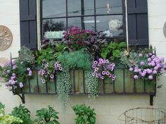 window box in purples