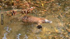 不要被牠們的大眼睛和絨毛暪騙,這10種動物其實是很危險的! - boMb01