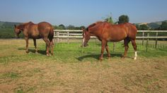 My horses in their field. Horses, Animals, Ideas, Animaux, Animales, Horse, Animal, Dieren