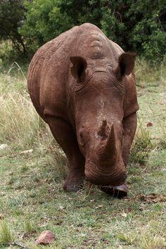 hausbau-beratung.com: mit einer persönlichen Bauplanung jetzt Ihren Wohntraum realisieren - wertbständiges #Massivhaus  http://ueberschriftennews.blogspot.com/2012/09/hausbau-beratungcom-mit-einer.html  Approach, Rhino