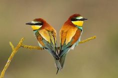 Beautiful colored birds - all earth tones, my favorite!