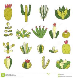 Cute hand drawn doodle cactus, succulent collection