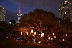 Auckland Lantern Festival - by Kiwifinch