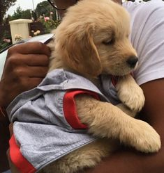 Cute Little Puppies, Cute Dogs And Puppies, Baby Dogs, I Love Dogs, Doggies, Pretty Animals, Cute Baby Animals, Animals And Pets, Funny Animals