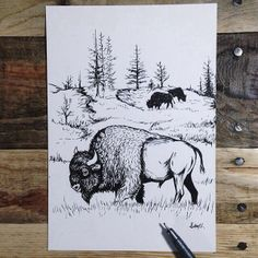 FREE Bison patch while supplies last.Signed and numbered to 50 by artist, Sam Larson.Ships within weeks of order. Buffalo S, Buffalo Animal, Animal Drawings, Art Drawings, Bison Tattoo, West Art, Silk Screen Printing, Indian Art, Black And White