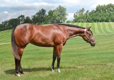 This young mare is ready to try her hand at Western Pleasure. See her ad on Equine.com!