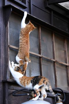 "CATS IN WINDOW…….""HURRY UP, GINGER……..MY BACK IS KILLING ME""……..ccp"