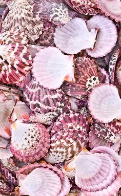She sells seashells. in pink of course 💕 Natur Wallpaper, Beach Tumblr, Pink Aesthetic, Summer Aesthetic, Cute Wallpapers, Trendy Wallpaper, Pink Color, Sea Shells, Pretty In Pink