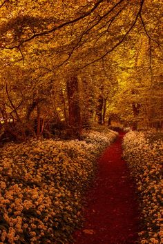 Forest Path, The Lake District, England. Beautiful autumn colors. #England #autumn