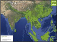 Image result for asia forest cover Asia, Cover, Painting, Image, Painting Art, Paintings, Painted Canvas, Drawings